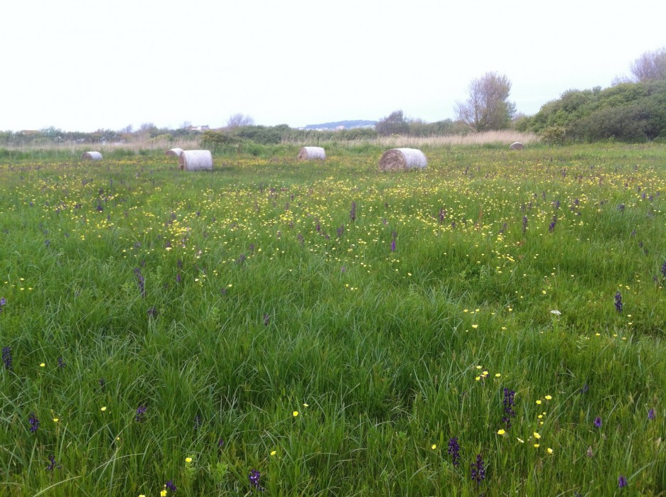 Collection of Hay Bales, with Wild Orchid Seed