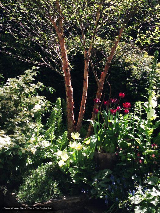 42-chelsea-flower-show-2016-garden-bed-planting-tulips