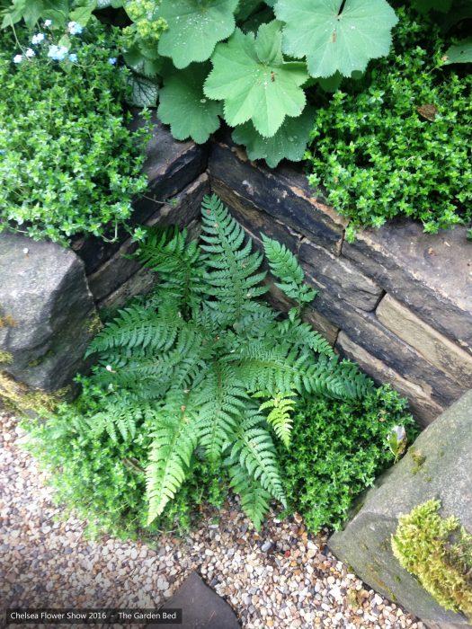 56-chelsea-flower-show-2016-garden-bed-ferns